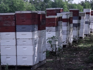 Stroope Honey Farms