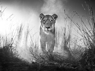 Wildlike Photography by David Yarrow