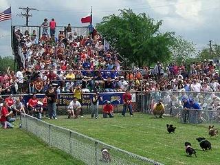 Austin Photo: Events_Wiener Dog Race_Crowds