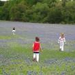 News_Ruthie_Brenham and Bluebonnets_Bluebonnet Field