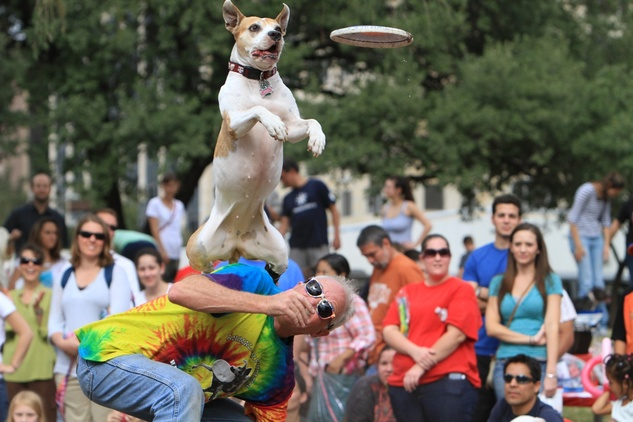 Austin Photo Set: News_Karen brooks_pit bull_Nov 2011_1