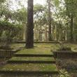 News_Nancy_Greek_Rienzi Folly Garden