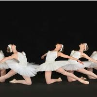 Houston Repertoire Ballet presents <i>Celebration of Dance</i>