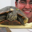 3. Red-eared Slider and volunteer, Urie Zavala Katie Oxford Wildlife Center of Texas December 2014
