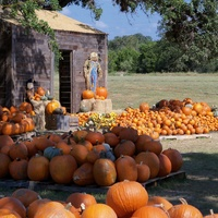 Bethany Lutheran Church Pumpkin Patch