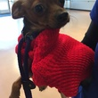 Houston weather freeze January 2015 A sweater doesn't mean Peanut is warm! Vets @ Houston SPCA say it's a myth & u need to make sure ur dog is indoors!