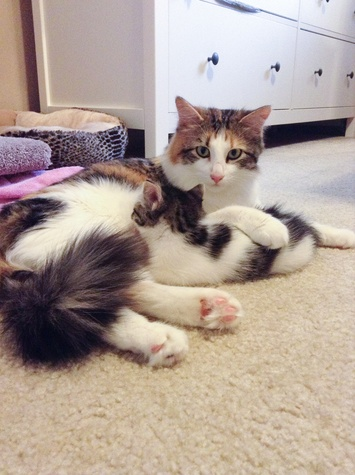 Pet of the Week Patches the cat from Austin Pets Alive with her kitten
