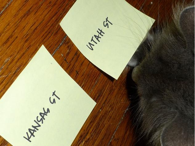 corfu cat bracket animals