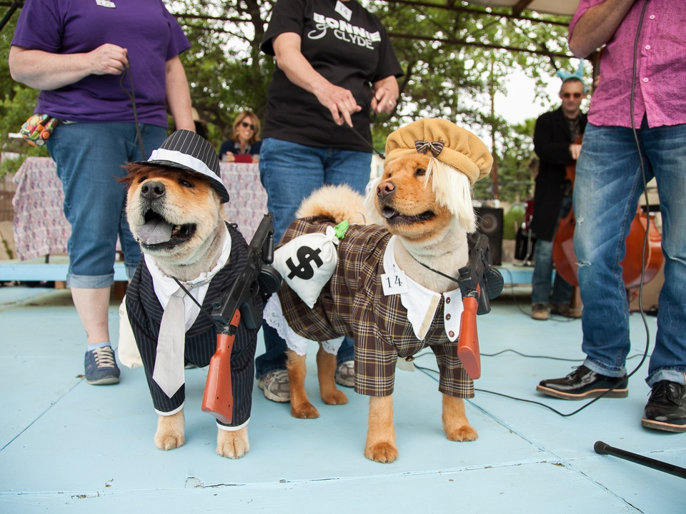 Jo's 16th Annual Pet Parade in Austin 1st Place Dog Costume Bonnie and Clyde Jolene Elvira Joyce Hays