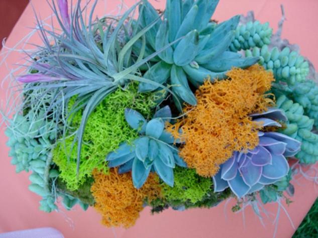 Austin Photo Set: News_Adrienne Breaux_sassy succulents_July 2011_planter