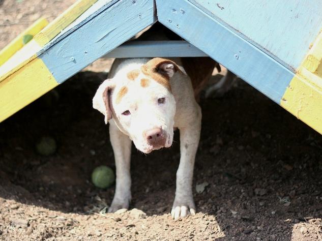 Marybell Austin Pets Alive! dog