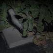 Photo of skunk among squash plants