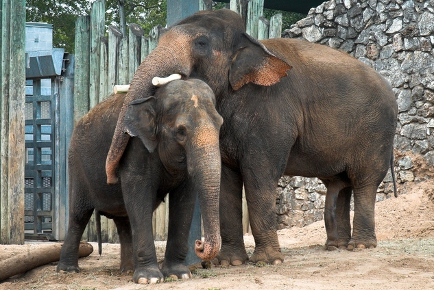 happy valentine's day from the lovers at houston zoo - culturemap, Ideas