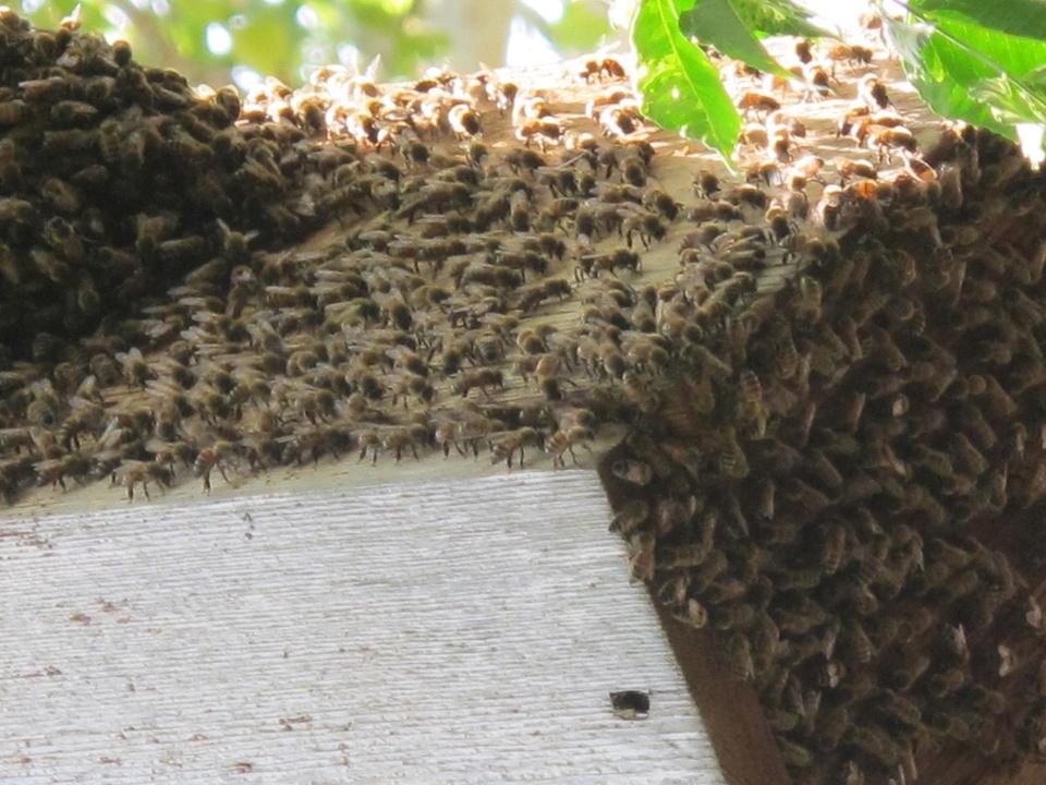 News_Katie_Patsy Cravens_bees at work