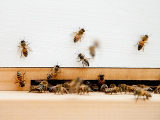 Bees in the apiary on the rooftop of Trace