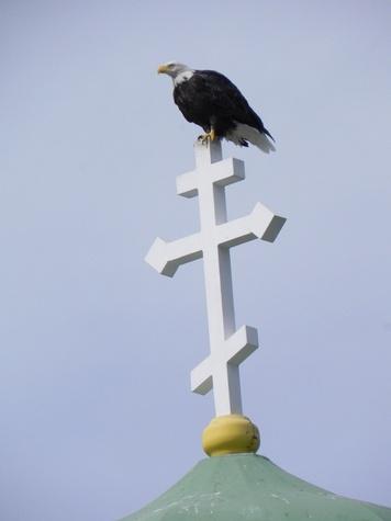 News_UnAlaska_Bald Eagle on Cross