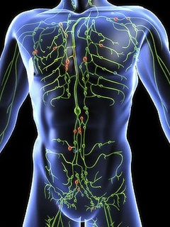 News_lymphatic_system