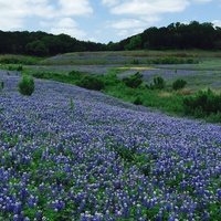 Muleshoe Bend wildflowers