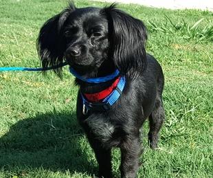 Houston, Ken Hoffman_Pethouse pet of the week, June 16 2016, Kenna