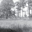 Image of Memorial Park Grasslands Circa 1938 as cited in An Ecological Study in Memorial Park by Marguerite Key Fitzgerald