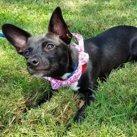Houston, Hoffman, Petset Pet Gypsy, Sept 2017