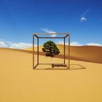 Shiki Timeless Pine tree