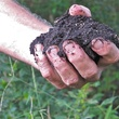 """4 Katie Laughing Frog Farm October 2013 """"This dirt is ready to use,"""" Glen said. """" The worms have done all their work."""""""