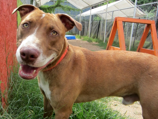 Picture this Pet - Austin Pets Alive - Tyler 3 - February 2015
