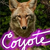 Jonathan Hopson Gallery presents Coyote