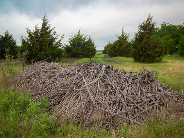 Photo of brush pile made of canes