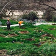 News, Shelby, Buffalo Bayou Park tree planting, Feb. 2015