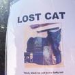 missing cat montrose coyote killer