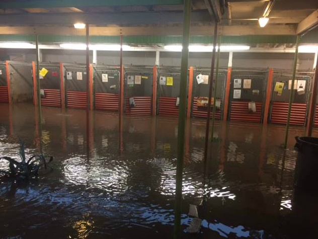 Town Lake Animal Center_Austin Pets Alive_flood_kennels_May 2015