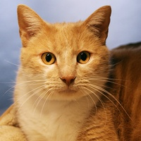 Pretty Boy, SPCA Pet of the Week