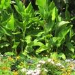 2. Katie Oxford Willem Kegge garden August 2014 The Bonnie Brae Esplanade
