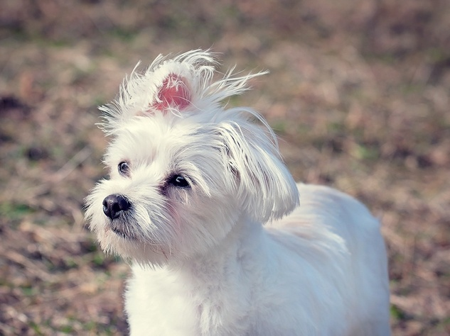 Dallas Dog Top Spots