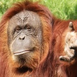 Houston Zoo exhibit paintings by elephants and orangutans April 2014 Cheyenne