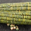 Photo of green corn on the cobb