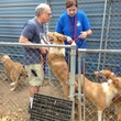 collies rescued September 2014 volunteers