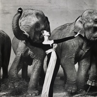 Richard Avedon, Dovima with Elephants