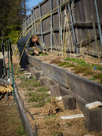 Michael Schoder gardening