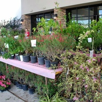 River Oaks Garden Club presents 65th Annual Pink Elephant Sale
