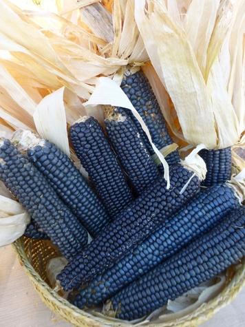 Photo of blue corn