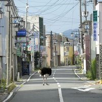 Asia Society Texas Center presents In the Wake: Japanese Photographers Respond to 3/11