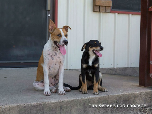 The Street Dog Project