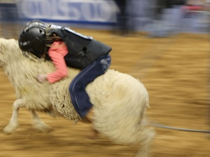 4, RodeoHouston, mutton bustin&#39;, March 2013