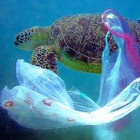 Austin Photo Set: News_Melissa Gaskill_plastic bags_wildlife_jan 2012_turtle