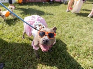 Best Friends Animal Society presents 2017 Strut Your Mutt 5K