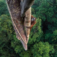 "The Houston Museum of Natural Science presents 52nd ""Wildlife Photographer of the Year"""