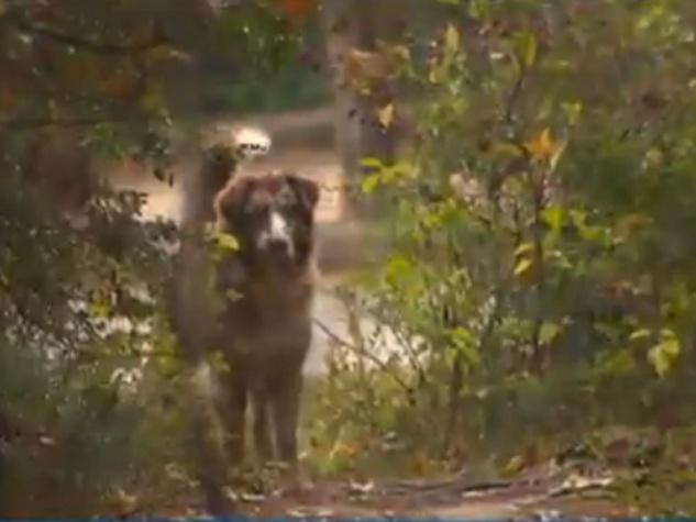 dog living in park in The Woodlands December 2014